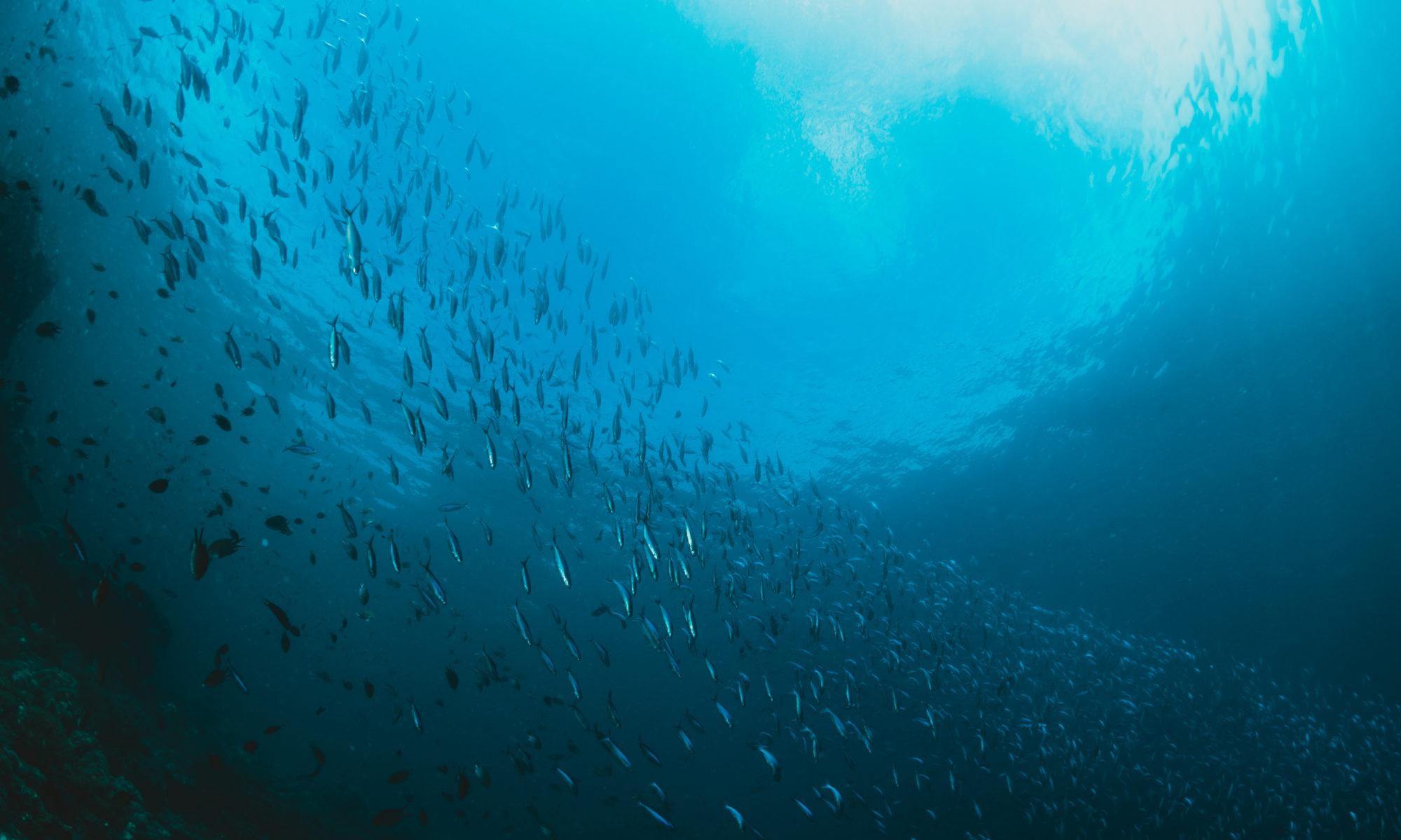Oceano Reddentes